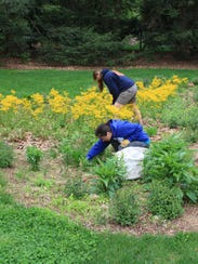 A rain garden can make a beautiful addition to the