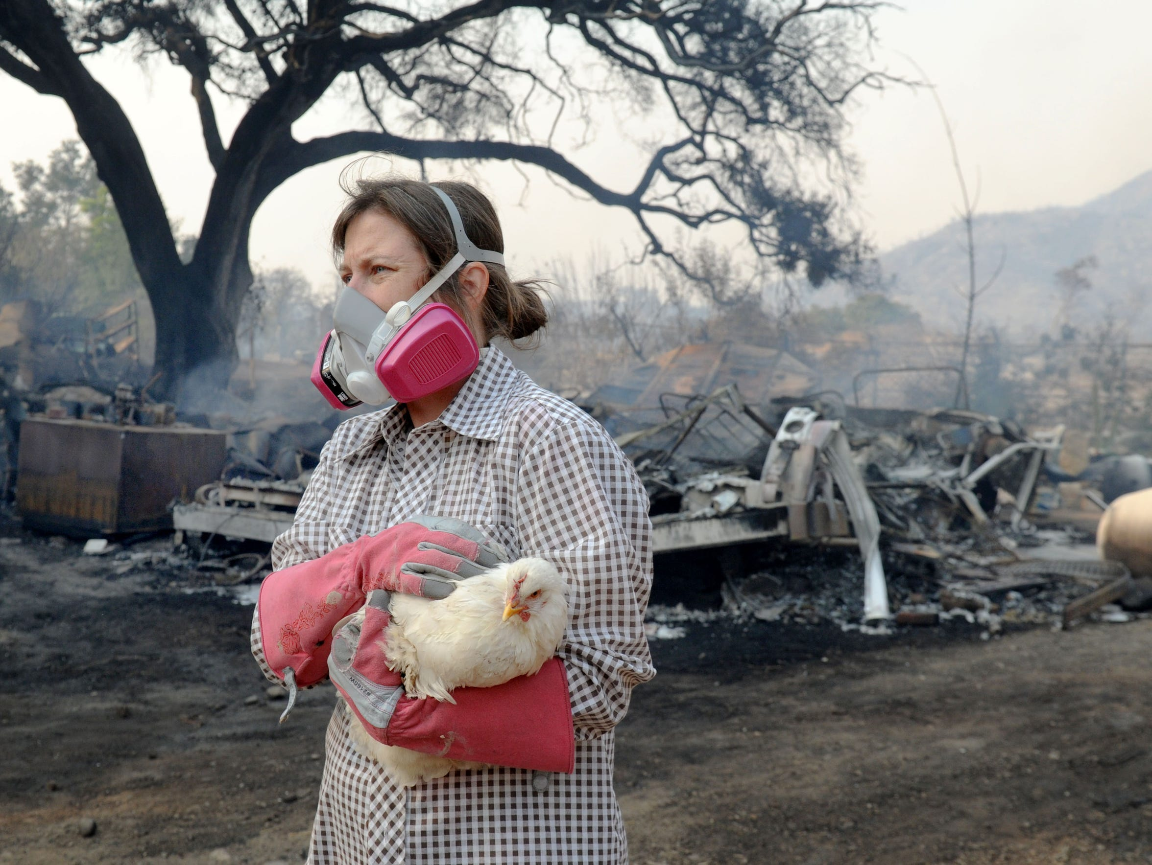 Jennifer Day carries a chicken at a property burned by the Thomas Fire along Rice Road in Ojai.