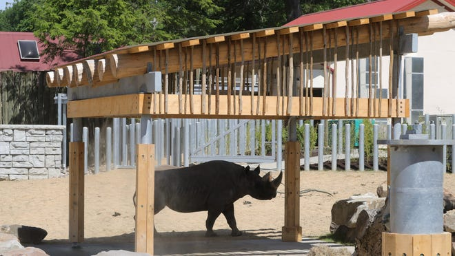 Forrest, an eastern black rhino, cools himself Tuesday under the misters in the new Daniel Maltz Rhino Reserve at the Cleveland Metroparks Zoo.