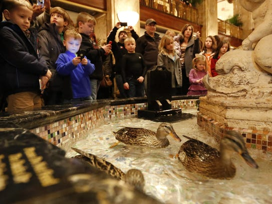 Tourists watch on as ducks swim in a fountain in the