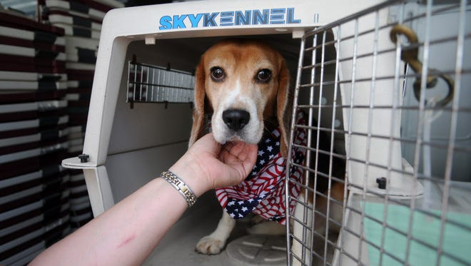 Dozens of dogs that were sprung from a bankrupt testing lab.