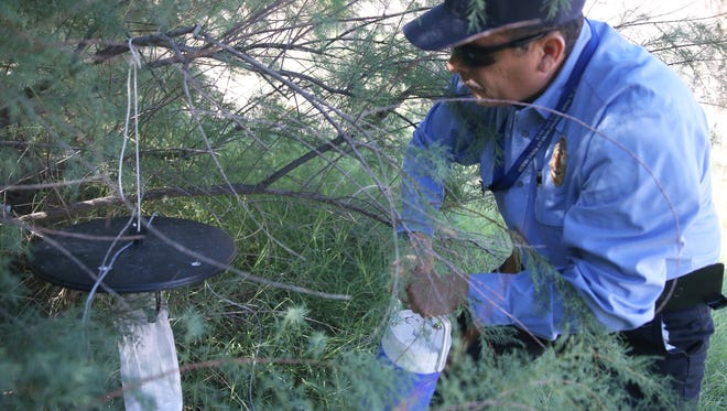 Carlos Saramiento recovers a mosquito trap from a tree in a ponding area Aug. 7 in East El Paso.