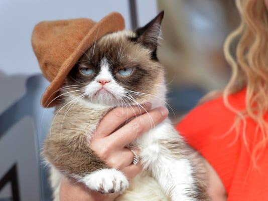Stars with Arizona ties: Grumpy Cat