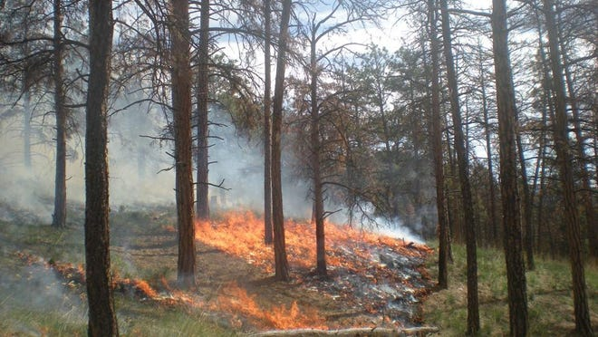 A prescribed fire burns in 2012 in the Jimtown Road area of Helena National Forest. The forest is planning prescribed fires around Helena and Townsend Ranger Districts this fall.