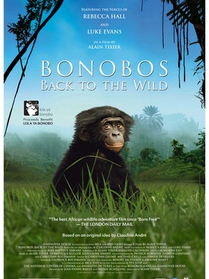 Beni the bonobo stars in a new documentary about his removal and eventual return to the Congolese jungle.