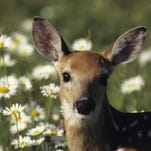 A $40,000 gift from the Safari Club International Foundation will help improve the winter habitat for deer in Michigan's Upper Peninsula.