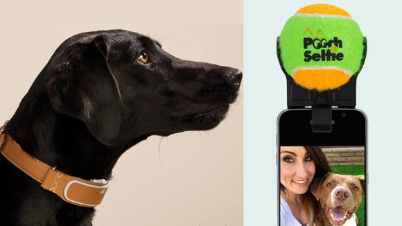 10 tech gadgets your dog will love