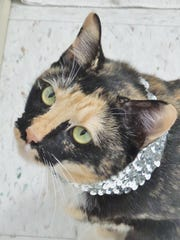 Sparkle is a loving 6-year-old calico girl who is looking for attention and love. She's super sweet and needs a place where she can really sparkle. Do you have the right spot for her?