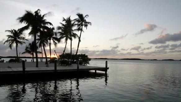Florida palm trees.