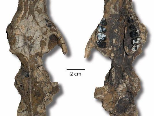 fossil pix