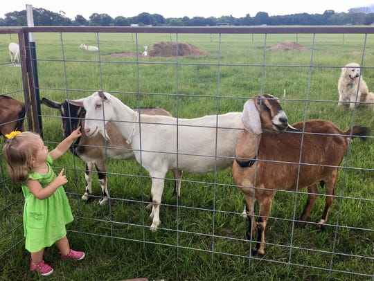 Marie Guidry, 1, makes new goat friends at ICCR Dairy
