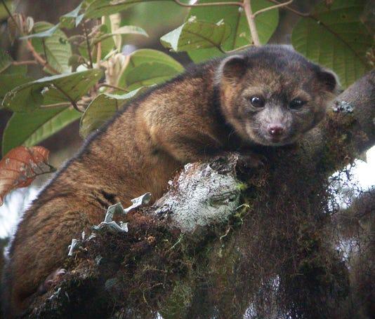 Watch: World's adorable new mammal