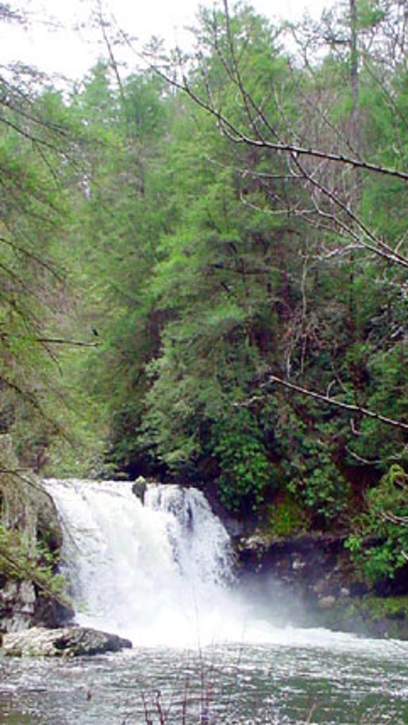A man drowned Thursday near Abrams Falls in the Cades Cove area of Great Smoky Mountains National Park.