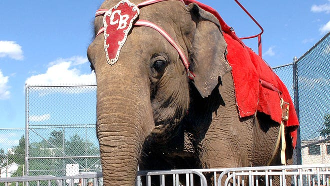 Elephants and other exotic animals in circuses and traveling shows are now banned in Hudson, as well as Bergen County.