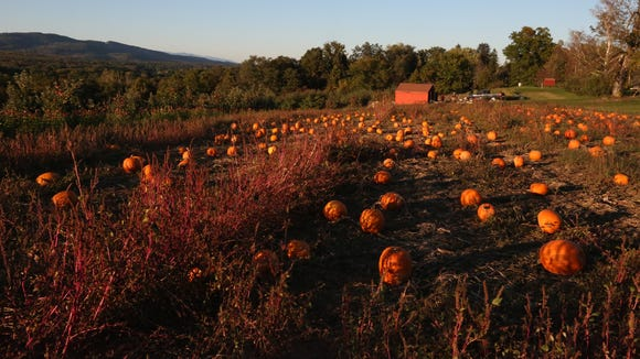 Late afternoon light hits the pumpkin patch at Dressel Farms in New Paltz Oct. 17, 2017.