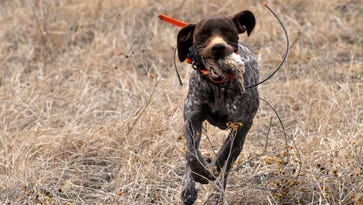 Annual quail hunt brings friends and funding to DRI