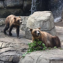 """Fortress of the Bears"" opens at the Great Plains Zoo"