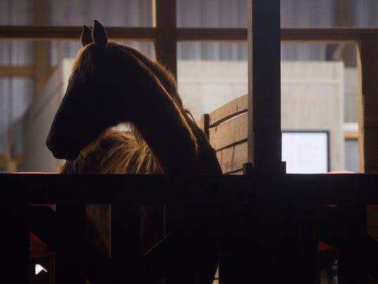 horse0110-0002.JPG