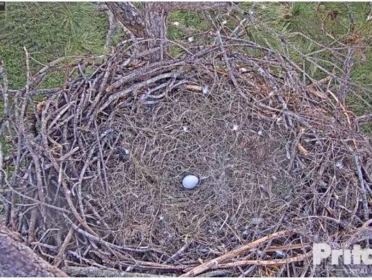 636467584321519917-Harriet-egg.JPG