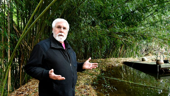 Un-affiliated independent activist Kevin L. Miller, of Lower Chanceford Township, is shown among the bamboo shoots near his koi pond at his co-owned 12-acre area, which spans three properties, where he and Allen Miller Arts partner Robert F. Allen, are planning to build a nature and art trail in Brogue, Pa. on Sunday, Nov. 29, 2015. (Dawn J. Sagert - The York Dispatch)