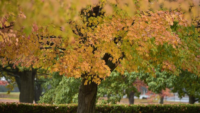 Leaves are changing to their fall colors before resting on the ground Thursday, Oct. 27, 2016 at Chambersburg Memorial Park.