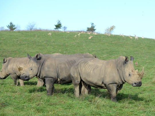 A group of rhinos at the Wilds in eastern Muskingum