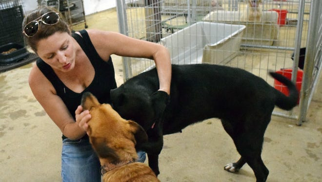 Sara Kelly with Cenla Alliance for Animals interacts with two of the dozens of dogs and cats the organization cares for while awaiting adoption.