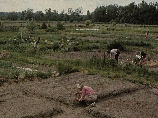 Gardening at Burlington's Intervale in the 1980s.