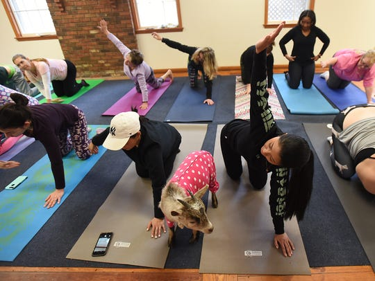 The Totes Goats yoga class at the New Weis Center in