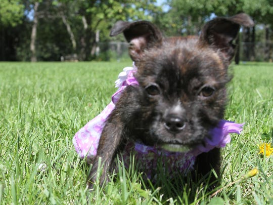 Hazel, the puppy rescued from from the trash at an