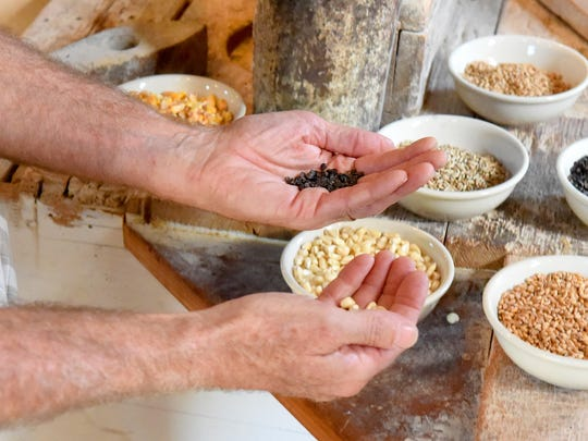 """Just explaining to kids where their food comes from, I hold out corn and wheat,"" said John Siegfried. ""And some kids have a hard time identifying which is which."" The owner and miller of Wade's Mill talks about how he likes to show children the various types of grain the mill grinds."