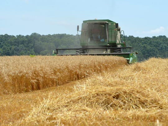 Wheat is harvested in a field along New Hope-Crimora Road in Fort Defiance Monday, June 30, 2014.