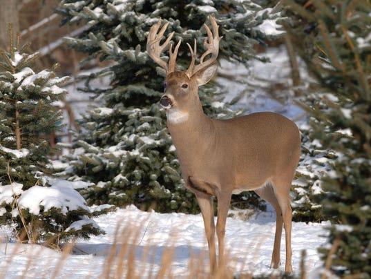 636506812092846308-Deer-Ohio-Department-of-Natural-Resources.jpg