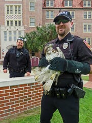 After it was rehabilitated at St. Francis Wildlife, Officer Ryan Bailey releases the hawk on Landis Green while Officer Scott Barrett looks on.