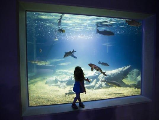 Aquarium Scottsdale