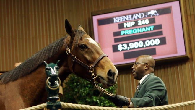 Aloof in the ring at the Keeneland November Breeding Stock Sale brought $3.9 million from Mandy Pope's Whisper Hill Farm.