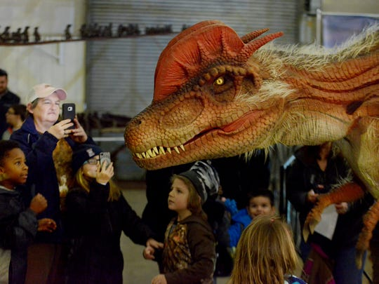 A life-size raptor walks around inside interacting with visitors at the Jurassic Quest dinosaur exhibit.