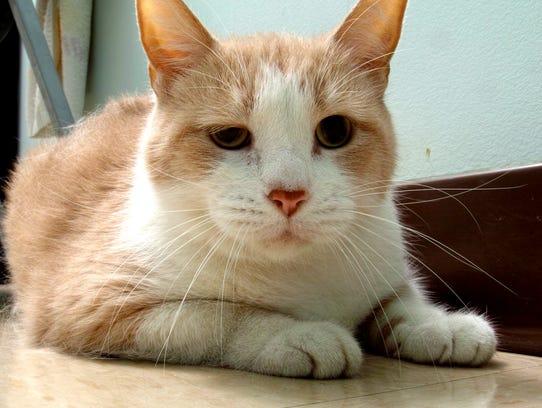 Humphrey is a sweet 10 year old boy. He enjoys watching