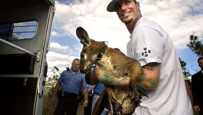Entertainer Robert Van Winkle, formerly known as Vanilla Ice, carries his pet kangaroo Bucky Buckaroo from Port St. Lucie Animal Control into a trailer for transport back home to Fort Lauderdale on Nov. 19, 2004. Bucky, and a goat named Pancho, escaped from his wife's grandmother's home after his children forgot to latch a gate.