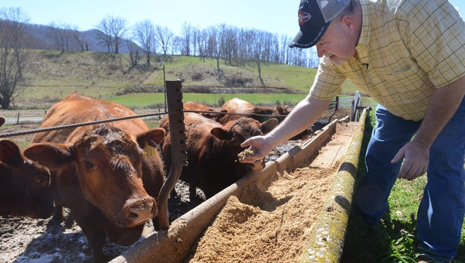 Spent beer grain can be used in a mixture to help with traction in snow. In this file photo from 2013, Martin Morgan feeds his Red Angus cows spent grain from Asheville Brewing at Morgan Farms Angus Beef in Leicester.