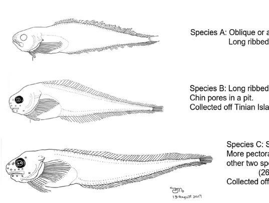 636399919663788453-fish-species.jpg