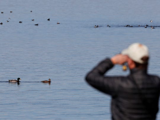 In this Sunday, Nov. 13, 2016 photo a member of tour group views ducks on Sabattus Pond in Sabattus, Maine. The Maine Brew Bus tour group combines bird watching and with visits to microbreweries in southern Maine.