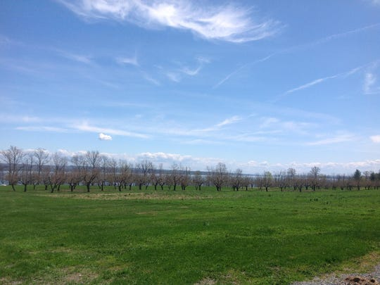 Stops along the Cayuga Wine Trail offer not only wine but also great views.