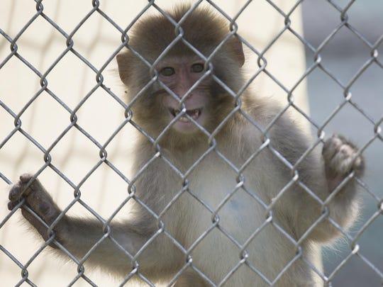 monkeyplan04