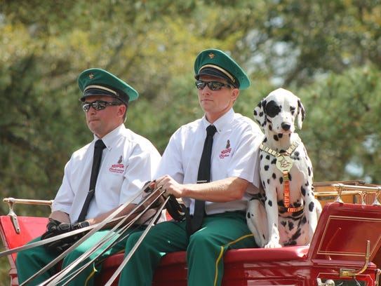 A dalmatian rides on a horse-drawn carriage at Red