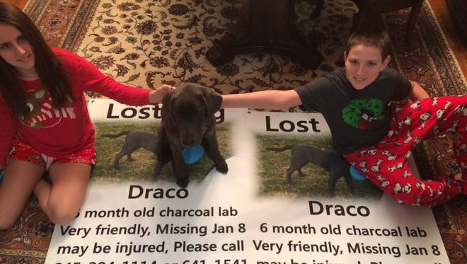 Draco the puppy returned to his Blauvelt home on Tuesday morning. He'd been missing since Friday evening.