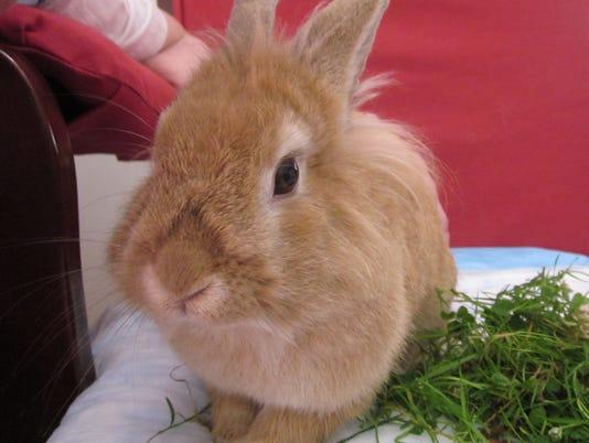 -bunny-20-c1.jpg_20110715.jpg