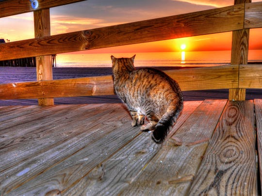 Seaside boardwalk cat (2)