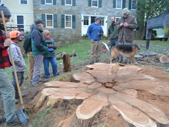 Friends of an ancient elm tree stand around the stump after it was cut down in Charlotte on Tuesday.