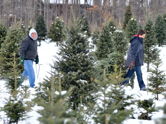 A Christmas tree gets hauled out of the woods Dec. 7 at Newby's Evergreen Farms near Wausau.